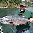 Chinook_salmon-04