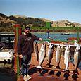 Fall Chinook Salmon