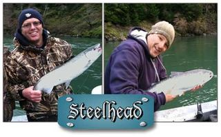 Steelhead-Fish