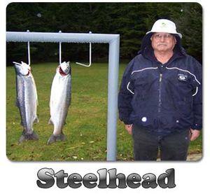 Goddard-steelhead